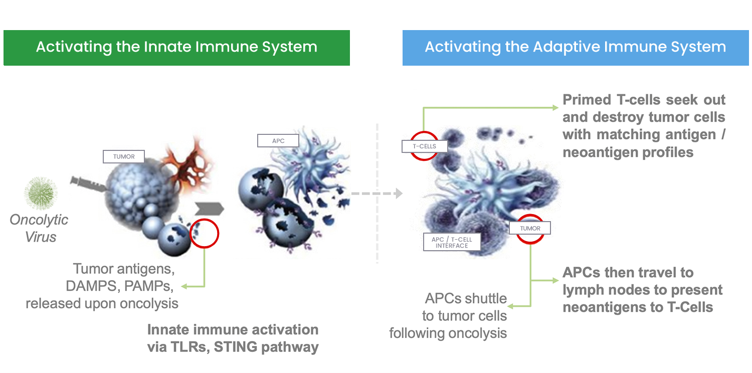 Oncolytic-Immuno-Therapy
